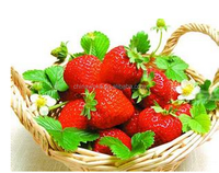 Export Hot sale 425ML Canned strawberry in syrup with FDA certification