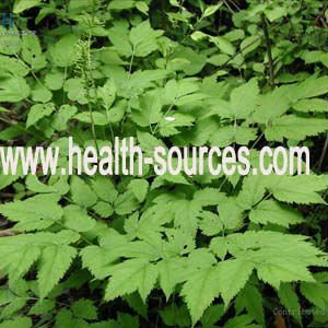 5%% Triterpene glycosides from Black Cohosh Extract