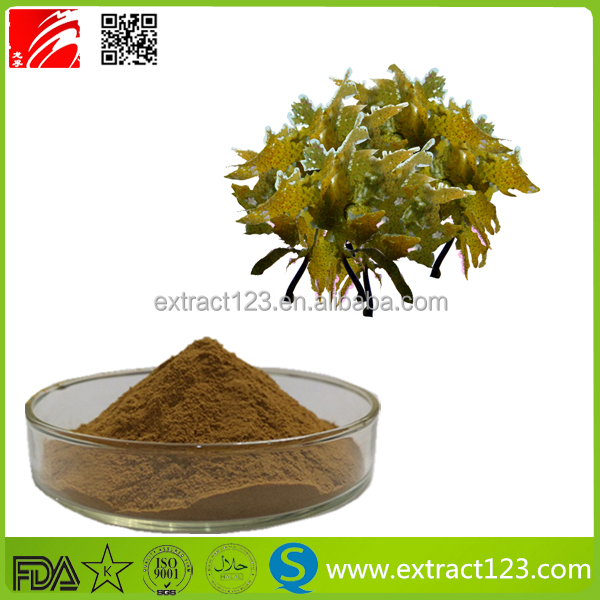 Food supplement brown seaweed kelp extract