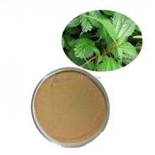 EX5037 100% Natural Medicinal Herbs Plant Nettle Root Extract 10:1