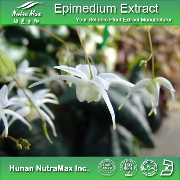 High Quality Icariin 50% 60% 80% 98% Epimedium Extract/Horny Goat Weed Extract