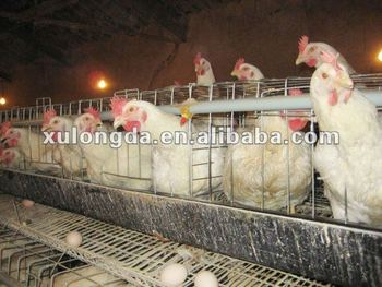 H type 3 tier Broiler chicken cage