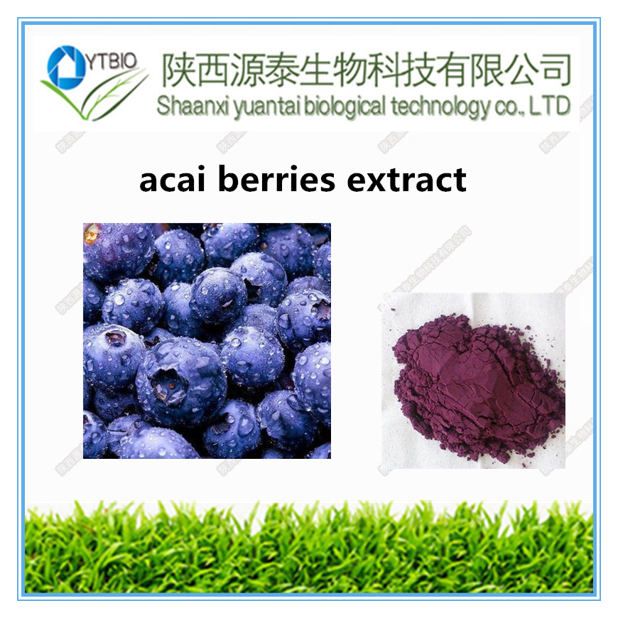 Best price pure natural acai berries fruit extract