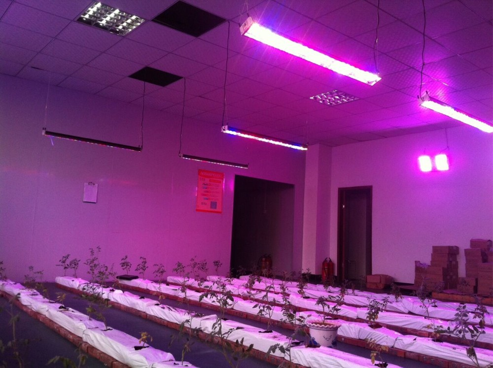 China Supplier grow led panel cob Of New Structure