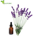Natural & pure lavender oil with low price, factory supply lavender oil