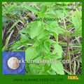 100% pure natural Oregano Leaf Extract carvacrol powder