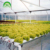 Industrial Vertical Growth commercial Hidroponia systems  Pvc Aeroponic Nft,nft for strawberry grow