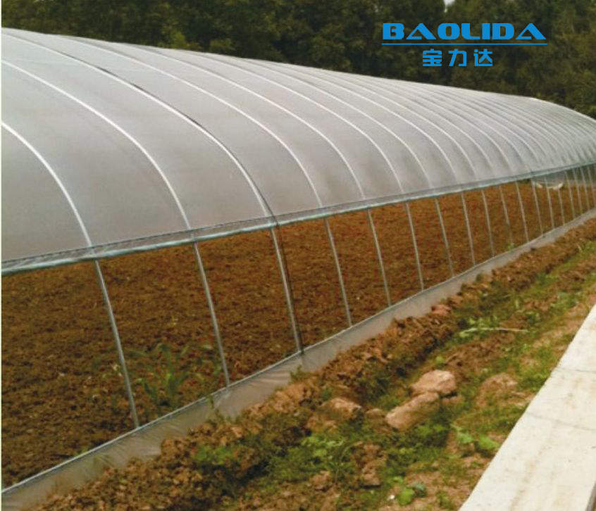 baolida Cheap PE Film Tunnel Greenhouse Mushroom Greenhouse