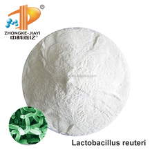Natural Probiotics Lactobacillus Reuteri Freeze Dried Powder