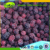 Passed ISO 22000 All Speficications price of frozen blackberry