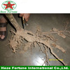 Direct selling paulownia elongata root rootstock