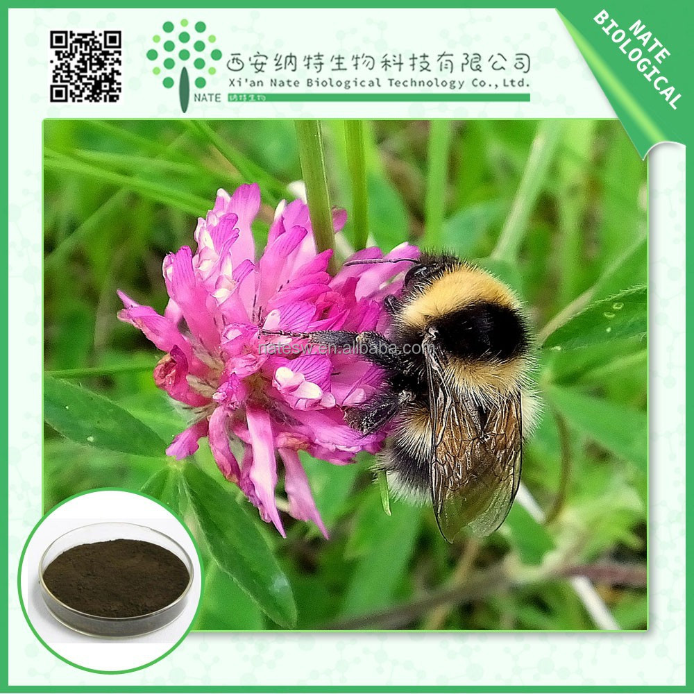in bulk in health&medical red clover extract powder Isoflavones 60% free sample