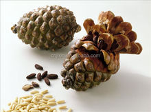 cheap bulk white pine nuts for sale