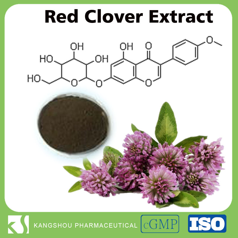 Natural herb extract Red Clover Flower Extract Powder