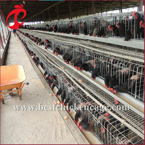 breeding layer chicken cages for kenya poultry farm