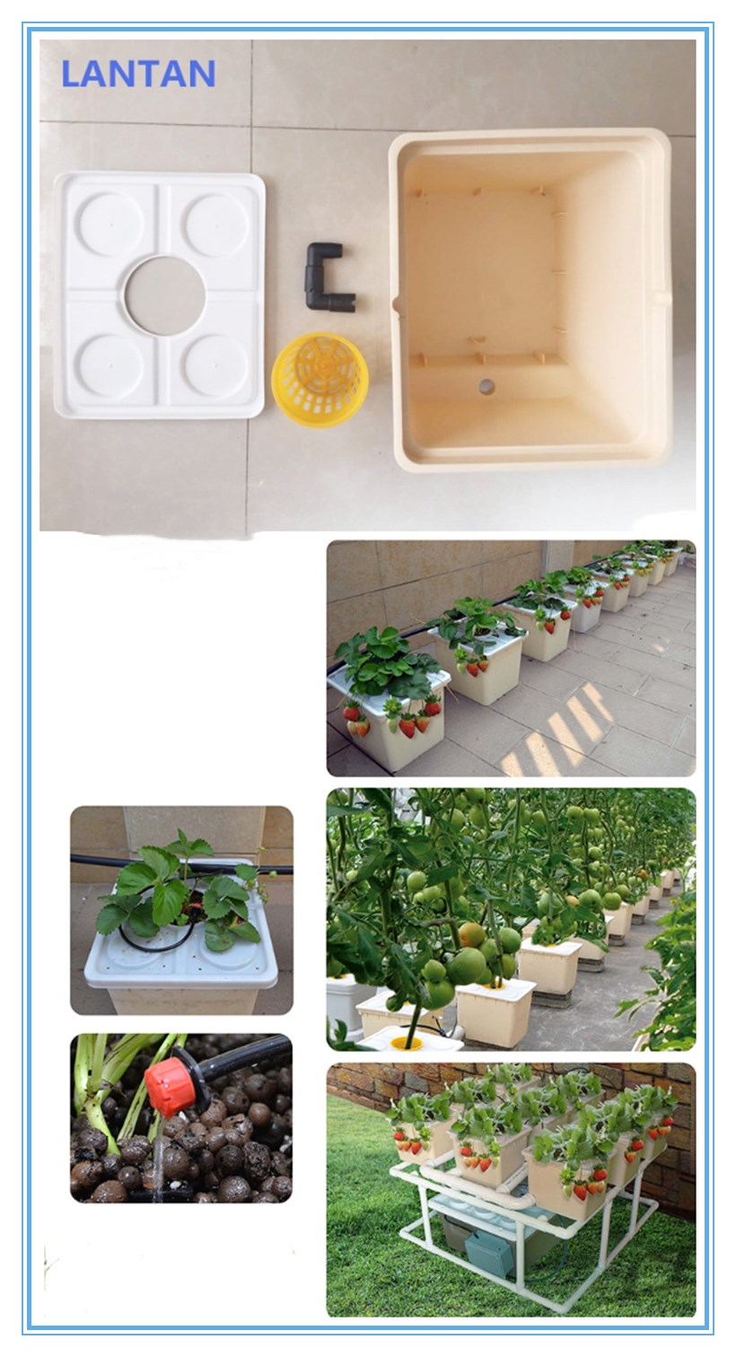 Most popular Dutch bucket system for agricultural greenhouse hydroponic planting