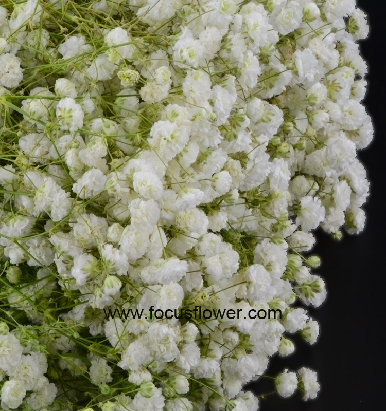 Walmart Wedding Flowers Gypsophila Wedding From Kunming Flower Planting Base Colorful Gypsophila