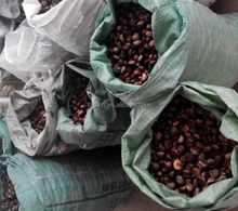 Chinese Organic Fresh Raw Sweet Chestnuts for Sale