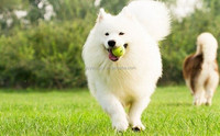 fine pet products , dog playing toys ball