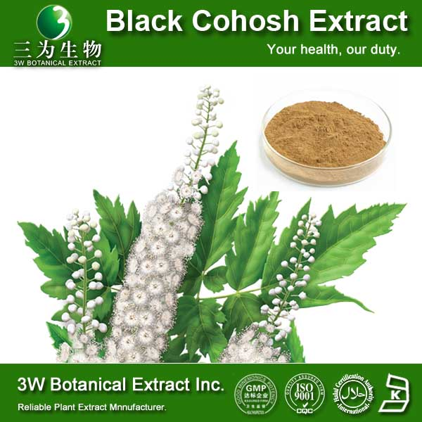 GMP&ISO Cimicifuga Racemosa P.E./Natural Black Cohosh Extracts Powder
