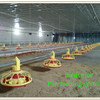 Agriculture Equipment Poultry Farming Chicken Feeder