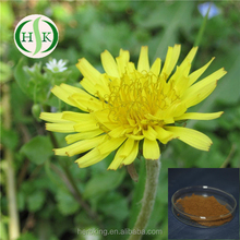 Free sample Dandelion Root Extract Factory Outlet Dandelion Root Powder