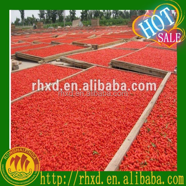 HOT! barbary wolfberry fruit 2012 new crop