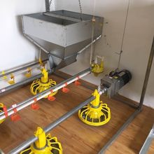 floor management poultry pan feeder for chicken automatic feeding system