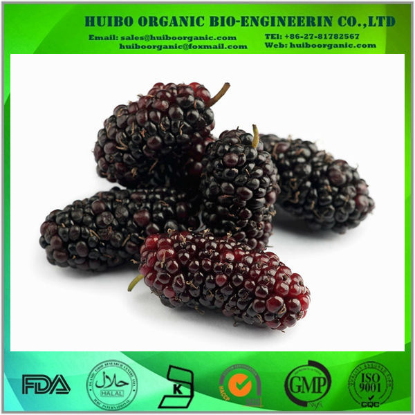 Mulberry fruit extract / Mulberry extract powder