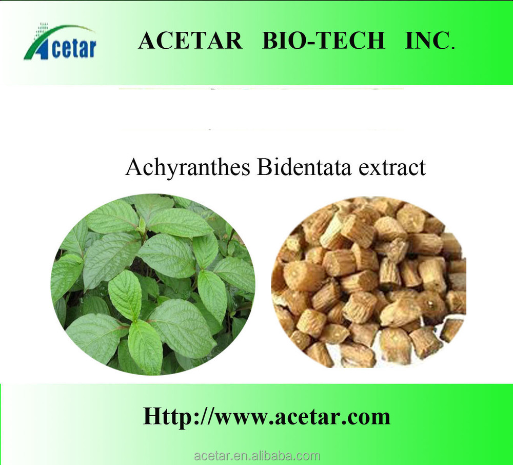 ISO& Kosher Halal facotory Achyranthes Bidentata Extract Powder/Plant Extract,Achyranthan