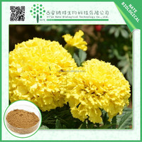 Alibaba China supplier manufacturer marigold extract xanthophyll 10:1