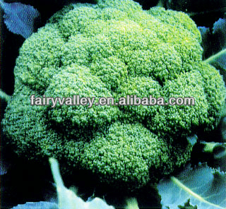 2017 F1 Hybrid Excellent Green Cauliflower Seeds Broccoli Seeds For Growing
