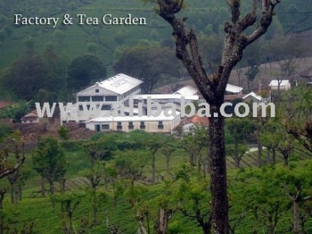 tea estate with factory sale in ooty