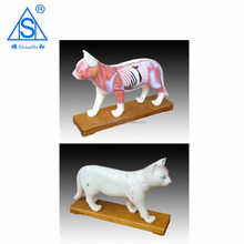 Cat acupuncture model pvc model hot new products for 2015