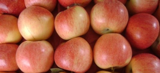 Apple Gaja from Baluchistan