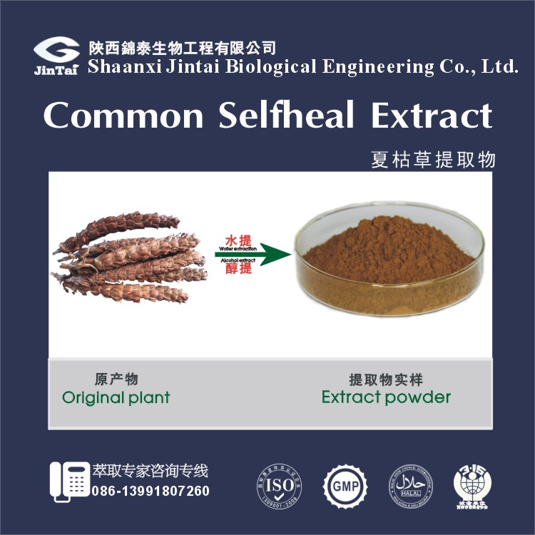 high quality selfheal, folium mori,chrysanthemum mix extract