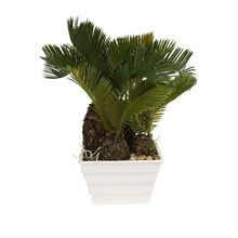 New product special design home decorations miniature plastic cycas tree