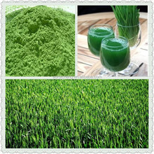 100% Natural Wheatgrass Powder