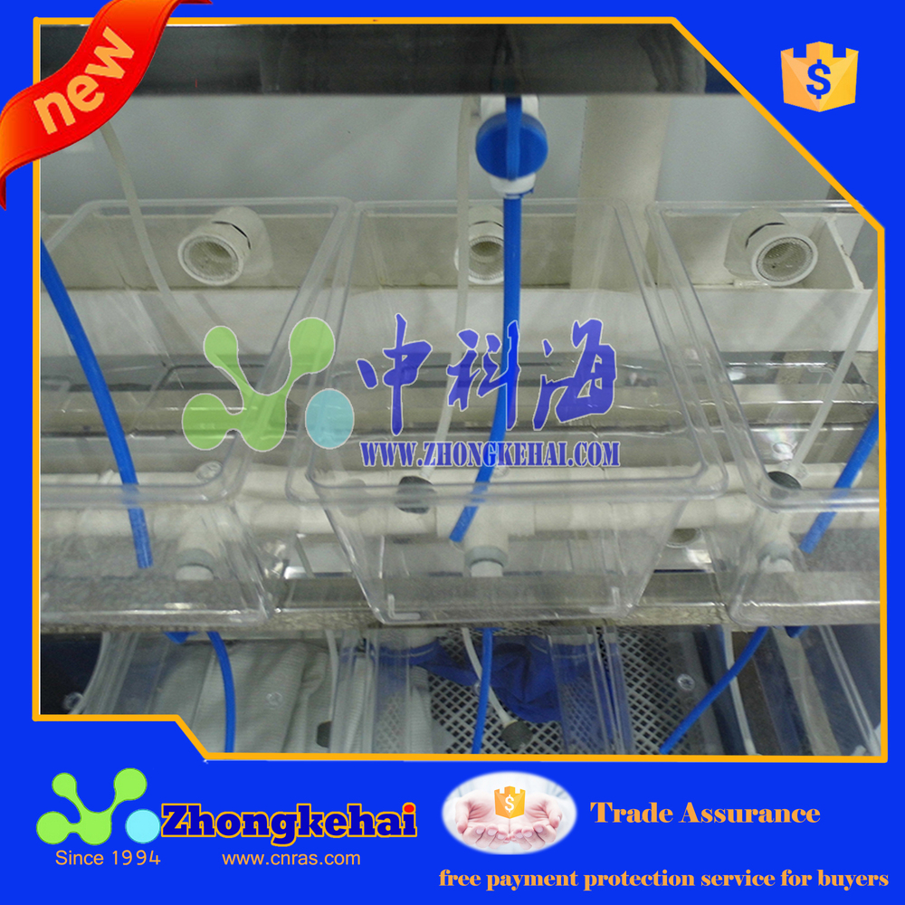laboratory small fish breeding system for test