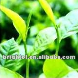 High Quality Oolong Tea Extract 30%-90% Polyphenols