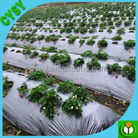 Henna Factory Supply Black Plastic LDPE Mulch Film Mulching Film for Agriculture