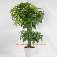 SJH020905 artificial plant japanese trees and plants pachira money tree plant