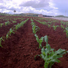Soil conditioner, Bio-composting starter culture, enzymes, microorganisms