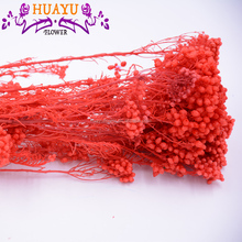 Stabilized wholesale new hot special flower longlasting preserved <strong>rice</strong> flower for for gift decoration