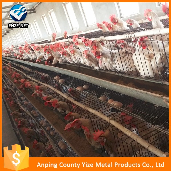 China Factory chicken cage for sale /128 birds capacity chicken farm products in Ghana (manufacturer)