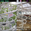 Tropical Hydroponic Grow Systems For Tomato