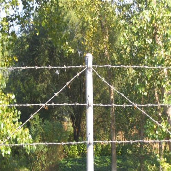 barbed wire  600 (2)