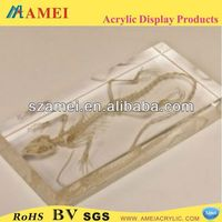 Hot sell custom acrylic real insect paperweight