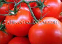 Top quality lycopene from tomato CAS 502-65-8