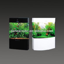Large elegant marine aquarium fish